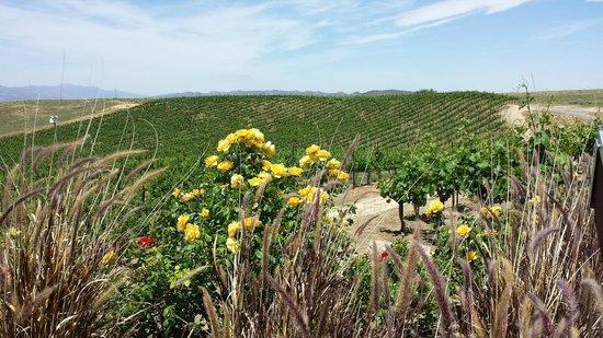 Grapeline Wine Tours: Callaway