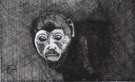 Orozco Art Gallery: next Mono Congo, Pen and Ink 8X11 in