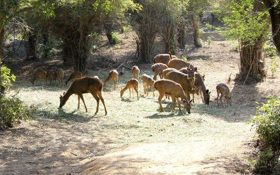 Bannerghatta National Park : deers