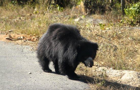 Bannerghatta National Park : bear