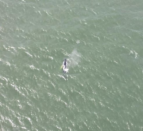 Coastal Helicopters : Humpback off the coast of, Nahs Head, OBX