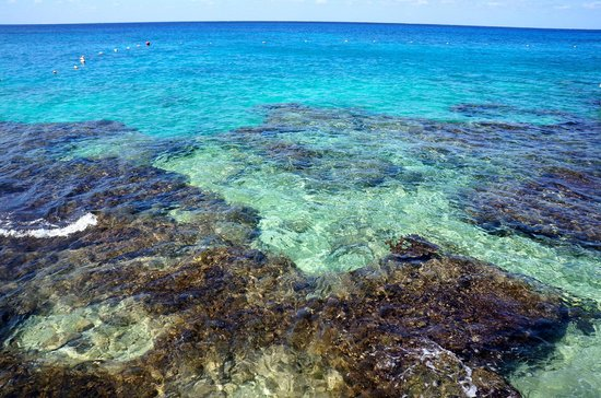 Cozumel Palace: there is no beach but beautiful coral reef