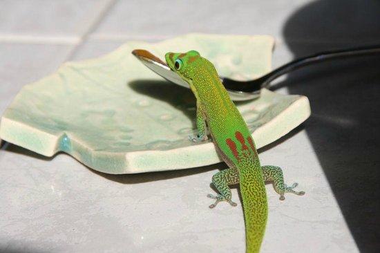 Aloha Guest House: 甘いものを見つけたGecko