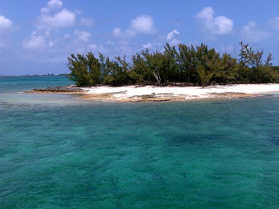 Comfort Suites Paradise Island: Stuart Cove's Snorkeling will pick you up!
