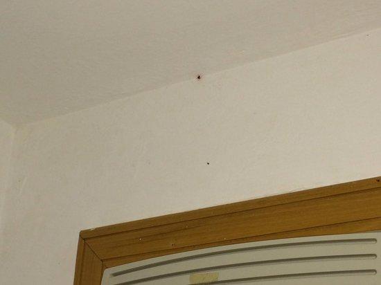 Atlantico Buzios Hotel : Spiders in the roof
