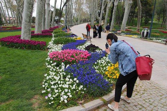 Gulhane Park: Gulhane Tulips Hunter.