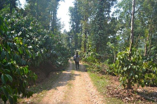 Vindhyas Homestay: Plantation area