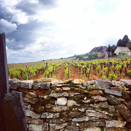 Wine and Voyages : A snapshot of the scenery experienced on tour