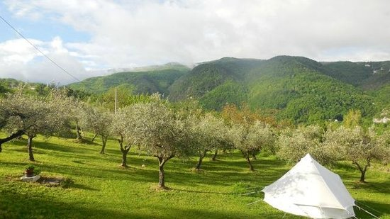Kokopelli Camping : Waking up in the olive grove with a specatacular view of the mountains.