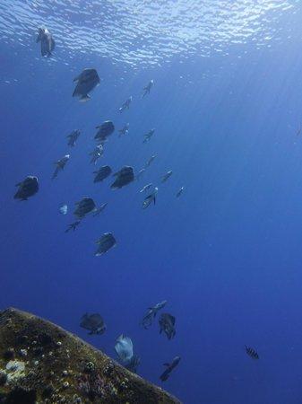 Dive Resort Seychelles: bonne visi