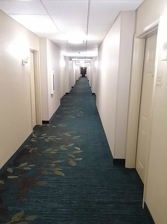 Candlewood Suites Greenville: Hallway