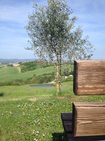 Podere Salicotto: Panorama
