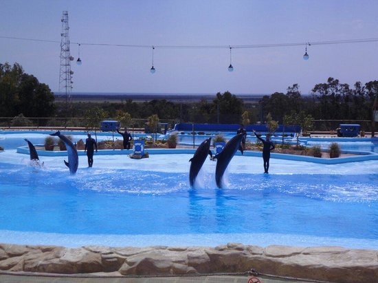 Friguia Park: The dolphin show was very good