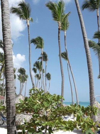 Melia Caribe Tropical: Heaven