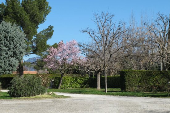 Camping Intercommunal le Brégoux : Campingplatz mit blühenden Bäumen