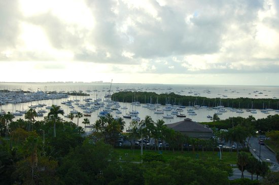 Sonesta Coconut Grove Miami : Pool/bar view