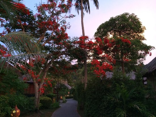 Phi Phi Island Village Beach Resort : Walking trough the resort