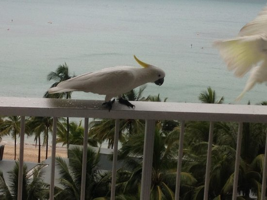 Reef View Hotel: Do not feed the birds!