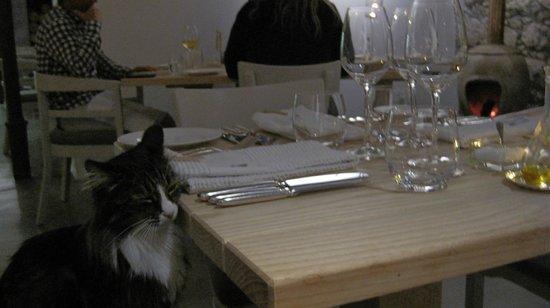 Springfontein Eats: our little furry guest