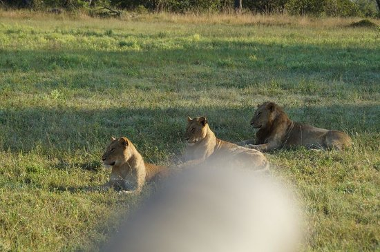 Arathusa Safari Lodge: ...wie bestellt...