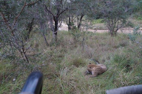Sabi Sand Game Reserve, Sydafrika: Unbeschreiblich schön!
