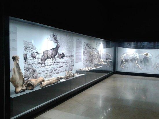 Museo de Prehistoria y Arqueologia de Cantabria: Animal excavations