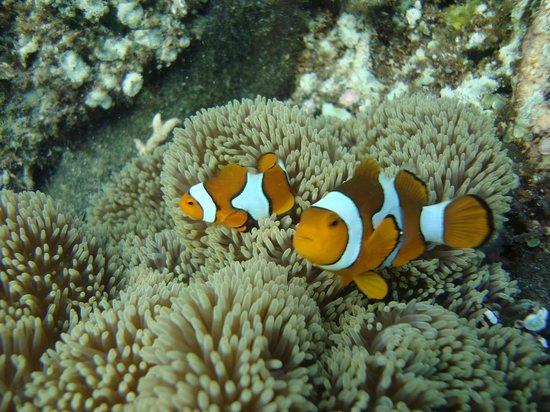 Black Marlin Dive Resort : Payasos