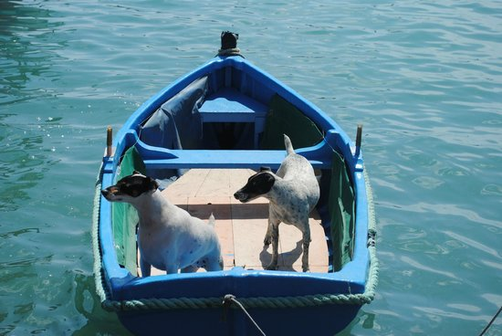 Blue Sea San Anton: Maltese dog pound !