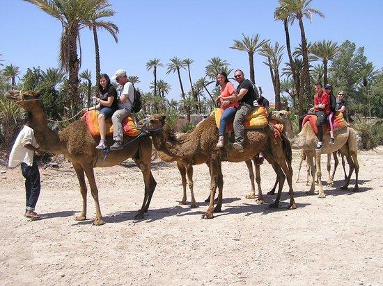 Marrakech Quad Evasion : droma