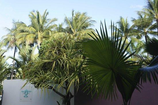 Peninsula Boutique Hotel: Tropical vegetation