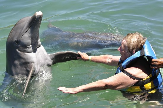 Dreams Puerto Aventuras Resort & Spa: Dolphin