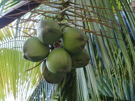 Iberostar Rose Hall Suites: Palm tree
