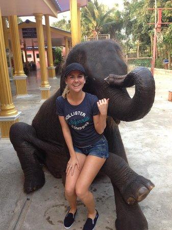Hutsadin Elephant Foundation: The 5 year old elephant for photos