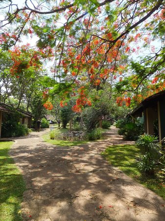 Sigiriya Village Hotel: Hotel grounds