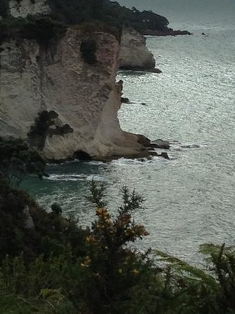 Cathedral Cove Walk: from the cliff