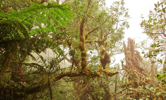 Monteverde Cloud Forest Biological Reserve: Life everywhere
