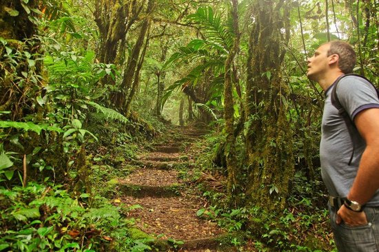 Monteverde Cloud Forest Biological Reserve: Lots of walking