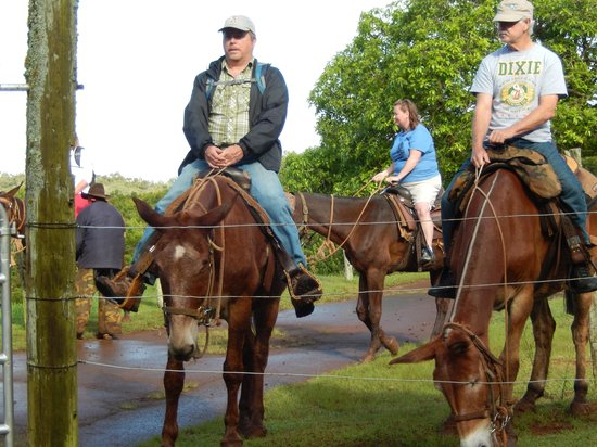 Molokai Mule Ride : Mule conference to determine line order
