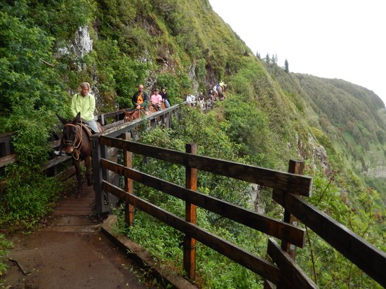 Molokai Mule Ride : A look back from position # 2