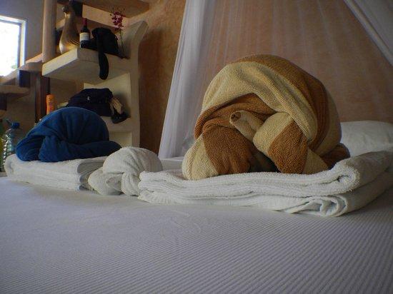 Posada Lamar: Las Tortugas! Always an interesting shape every day!