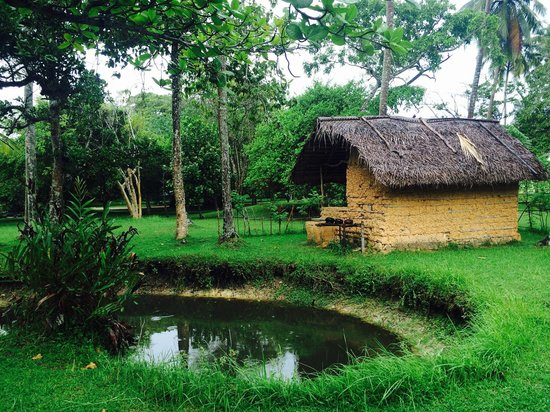 Martin Wickramasinghe Folk Museum Complex: Garden with traditional house