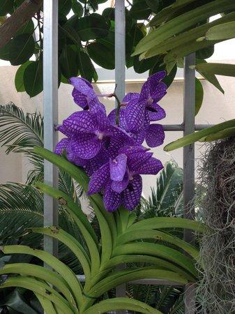 United States Botanic Garden: Orchids