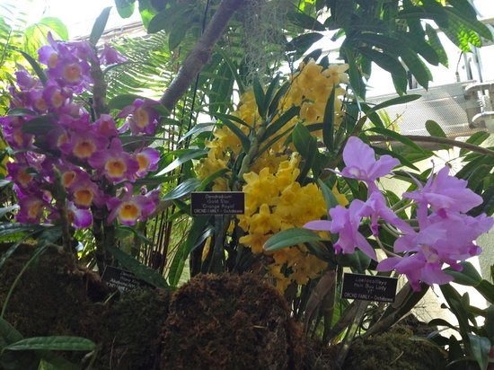 United States Botanic Garden: More orchids