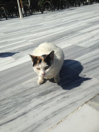 Hilton Istanbul Bosphorus: Please feed this cat - she is a delight. Always hangs around the pool area