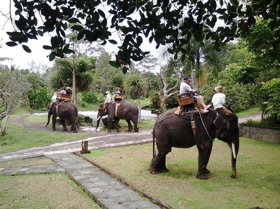 Balidetour's: Elephan Camp