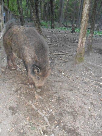 NH Forsthaus Fürth Nürnberg: Wildschweingehege Tip