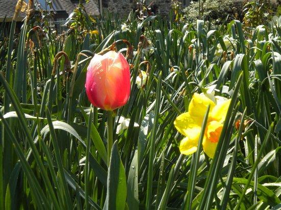 Alpenhof Bed & Breakfast: garden.....