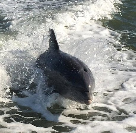 Sea Shell Boat Tours: Dolphins having fun!