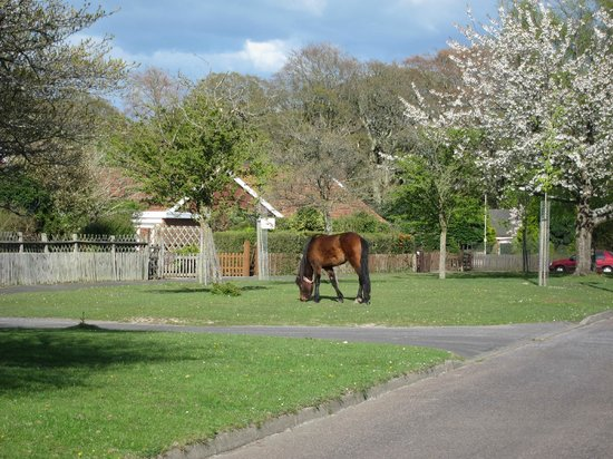 Pony right outside Little Heathers