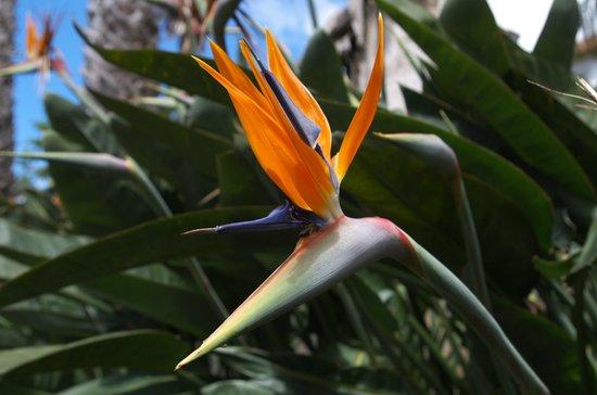 Monte Palace Tropical Garden : Tropical Garden